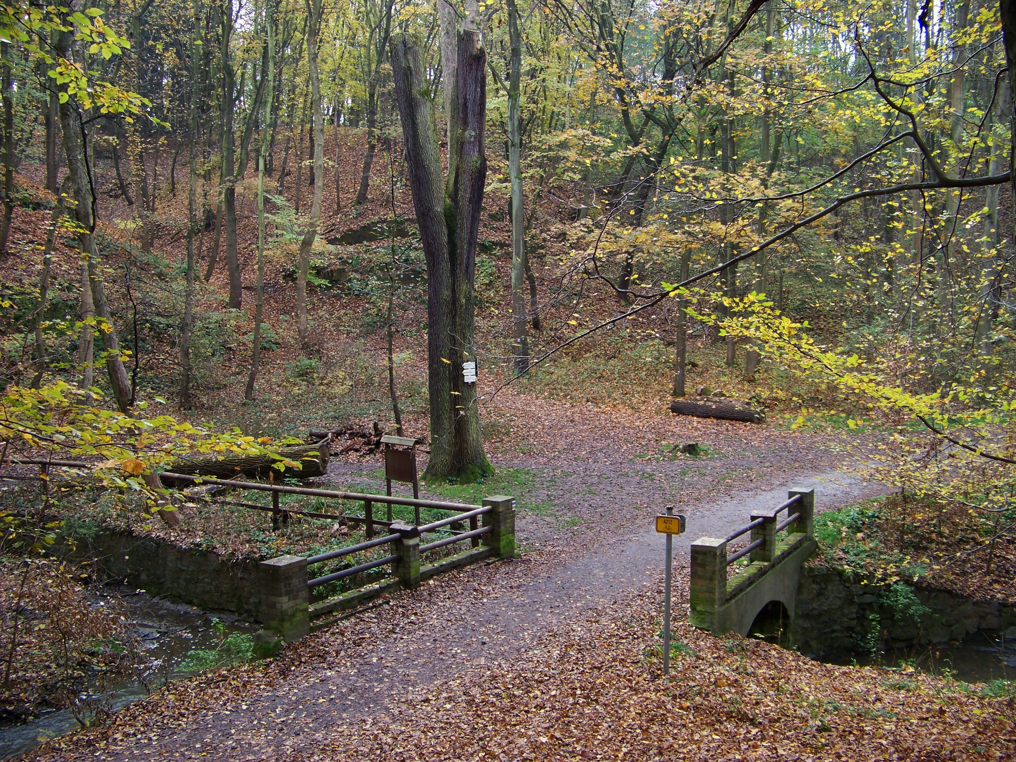 Мост в Кунратицком лесу