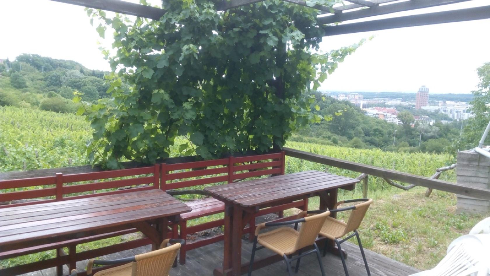 Виноградники Махалка